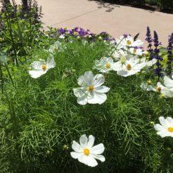Sun Loving Annual Flats - 48 plants per flat