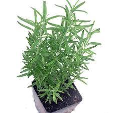 "Herbs - 4"" Pots"