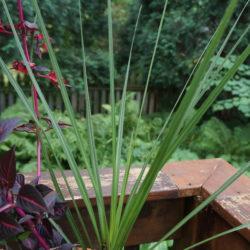 """Accent Plants - 4"""" Pots"""